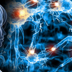 Researchers conclude consciousness survives after death