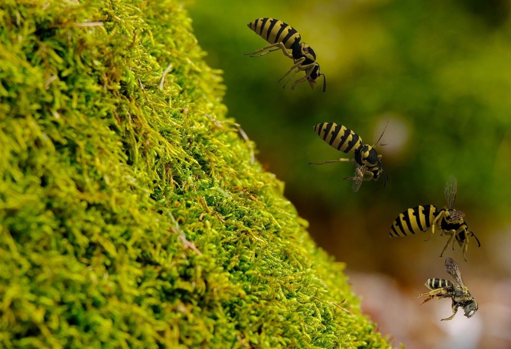 wasps flying down the hill
